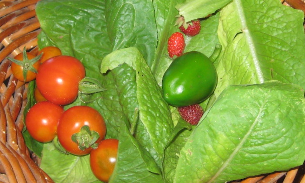 lettuce, berries, peppers_6135 copy